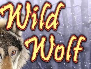 wild_wolf